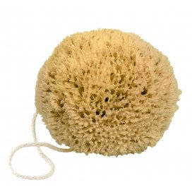 Mediterranean natural sea sponge